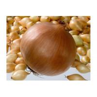 Лук-севок Геркулес  | Семена