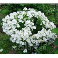 Лаватера Невеста белая Арт. 5714 | Семена