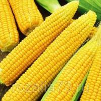 Кукуруза Лакомка сахарная Арт. 5258 | Семена