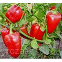 Перец Парниковый ультраскороспелый Арт. 5285 | Семена