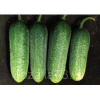 Огурец Гармония Арт. 5090 | Семена